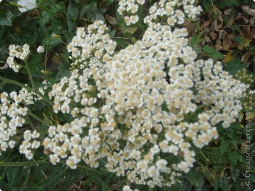 Пшеничные поля... фото 2