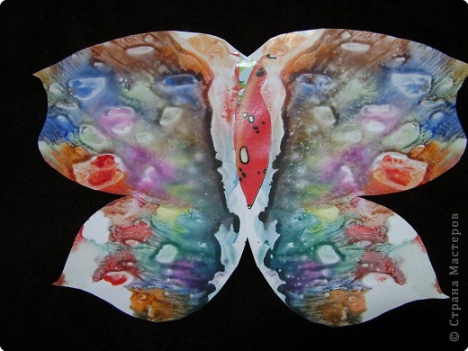 Бабочки фото 19