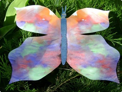 Бабочки фото 18