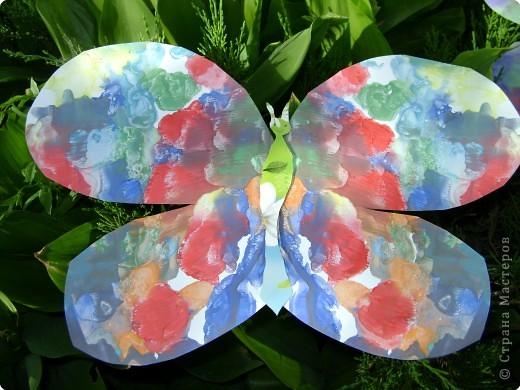 Бабочки фото 17