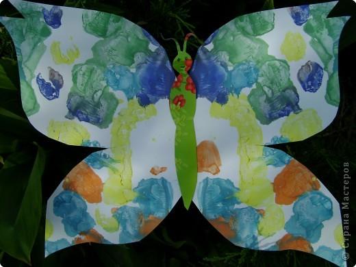 Бабочки фото 16