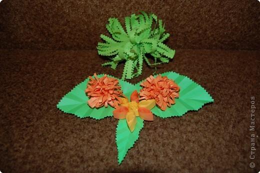бантики и бабочка фото 2