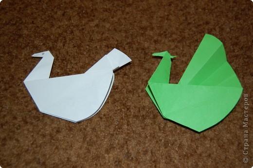 павлин умеющий распускать хвост.белый хвост сложил.зеленый-распушил фото 1