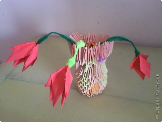 сова разноцветная фото 5