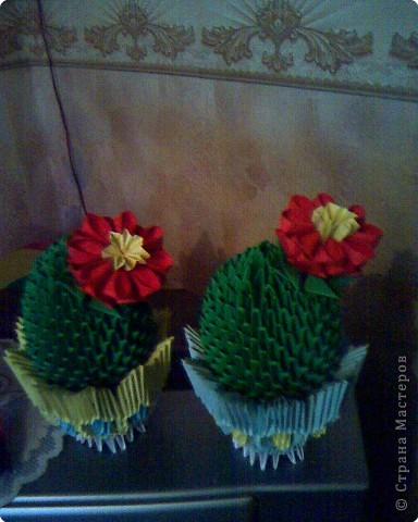 Оригами модульное: Мои кактусы фото 4