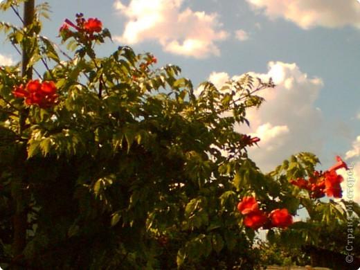 Красочный уголок Украины. фото 4