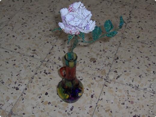 Царица цветов во всей красе фото 1
