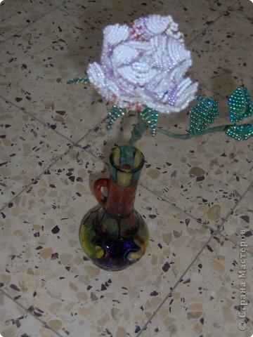 Царица цветов во всей красе фото 3