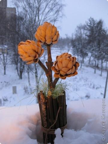 Фисташковое дерево, благодарность фото 1
