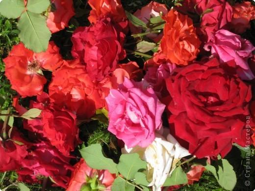 Сердце сложено мною из розовых цветков фото 2