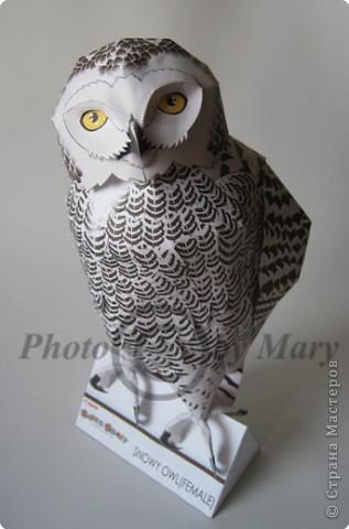 Бумагопластика: Опять сова! фото 1