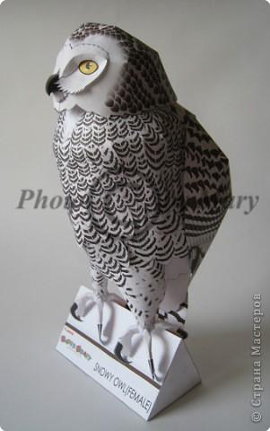 Бумагопластика: Опять сова! фото 3