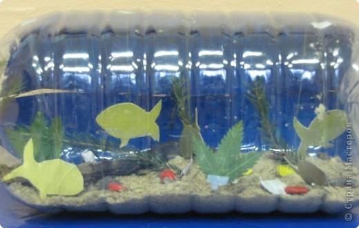Подводная одисея. фото 2
