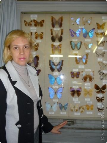 Выставка в Зоологическом музее Санкт-Петербурга работает всё лето. Поскольку находится в энтомологическом отделе, то и представлено больше всего фигур насекомых. А ещё есть паучки. фото 28