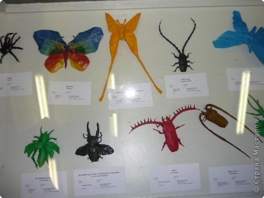 Выставка в Зоологическом музее Санкт-Петербурга работает всё лето. Поскольку находится в энтомологическом отделе, то и представлено больше всего фигур насекомых. А ещё есть паучки. фото 2