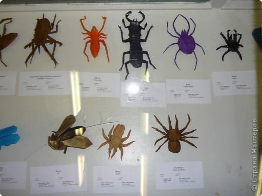 Выставка в Зоологическом музее Санкт-Петербурга работает всё лето. Поскольку находится в энтомологическом отделе, то и представлено больше всего фигур насекомых. А ещё есть паучки. фото 3