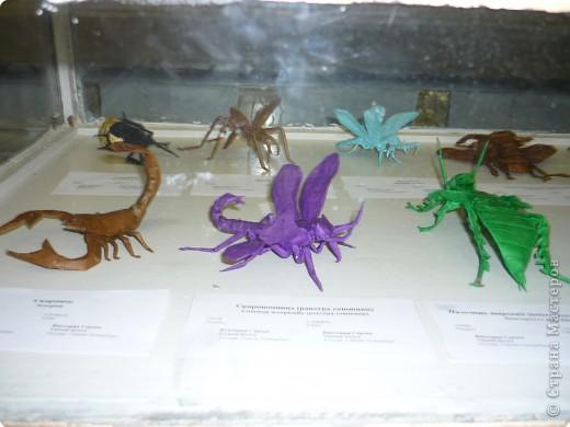 Выставка в Зоологическом музее Санкт-Петербурга работает всё лето. Поскольку находится в энтомологическом отделе, то и представлено больше всего фигур насекомых. А ещё есть паучки. фото 5