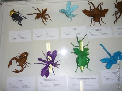 Выставка в Зоологическом музее Санкт-Петербурга работает всё лето. Поскольку находится в энтомологическом отделе, то и представлено больше всего фигур насекомых. А ещё есть паучки. фото 4