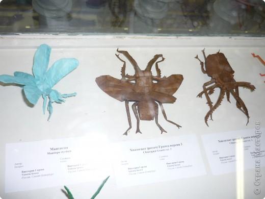 Выставка в Зоологическом музее Санкт-Петербурга работает всё лето. Поскольку находится в энтомологическом отделе, то и представлено больше всего фигур насекомых. А ещё есть паучки. фото 7