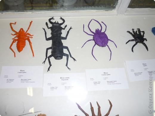 Выставка в Зоологическом музее Санкт-Петербурга работает всё лето. Поскольку находится в энтомологическом отделе, то и представлено больше всего фигур насекомых. А ещё есть паучки. фото 6