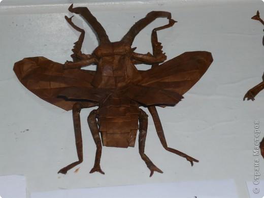 Выставка в Зоологическом музее Санкт-Петербурга работает всё лето. Поскольку находится в энтомологическом отделе, то и представлено больше всего фигур насекомых. А ещё есть паучки. фото 19