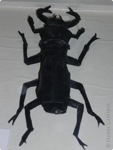 Выставка в Зоологическом музее Санкт-Петербурга работает всё лето. Поскольку находится в энтомологическом отделе, то и представлено больше всего фигур насекомых. А ещё есть паучки. фото 21