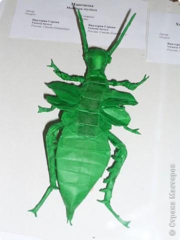 Выставка в Зоологическом музее Санкт-Петербурга работает всё лето. Поскольку находится в энтомологическом отделе, то и представлено больше всего фигур насекомых. А ещё есть паучки. фото 14