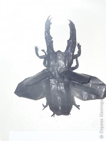 Выставка в Зоологическом музее Санкт-Петербурга работает всё лето. Поскольку находится в энтомологическом отделе, то и представлено больше всего фигур насекомых. А ещё есть паучки. фото 17