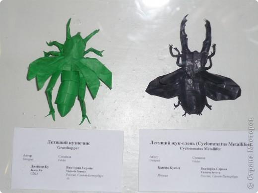 Выставка в Зоологическом музее Санкт-Петербурга работает всё лето. Поскольку находится в энтомологическом отделе, то и представлено больше всего фигур насекомых. А ещё есть паучки. фото 16