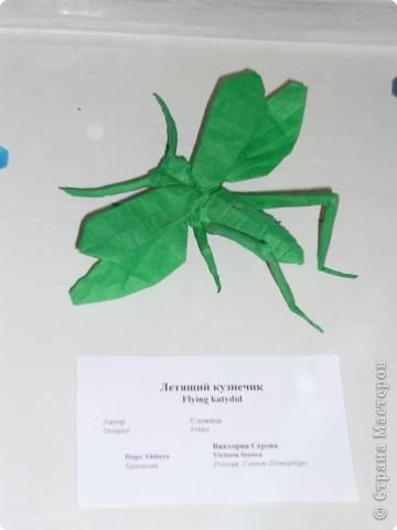 Выставка в Зоологическом музее Санкт-Петербурга работает всё лето. Поскольку находится в энтомологическом отделе, то и представлено больше всего фигур насекомых. А ещё есть паучки. фото 12
