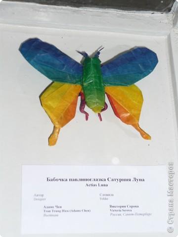 Выставка в Зоологическом музее Санкт-Петербурга работает всё лето. Поскольку находится в энтомологическом отделе, то и представлено больше всего фигур насекомых. А ещё есть паучки. фото 10