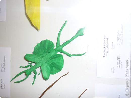 Выставка в Зоологическом музее Санкт-Петербурга работает всё лето. Поскольку находится в энтомологическом отделе, то и представлено больше всего фигур насекомых. А ещё есть паучки. фото 23