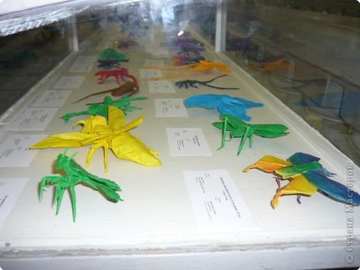 Выставка в Зоологическом музее Санкт-Петербурга работает всё лето. Поскольку находится в энтомологическом отделе, то и представлено больше всего фигур насекомых. А ещё есть паучки. фото 8