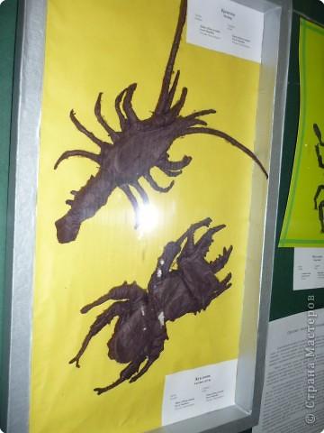 Выставка в Зоологическом музее Санкт-Петербурга работает всё лето. Поскольку находится в энтомологическом отделе, то и представлено больше всего фигур насекомых. А ещё есть паучки. фото 25