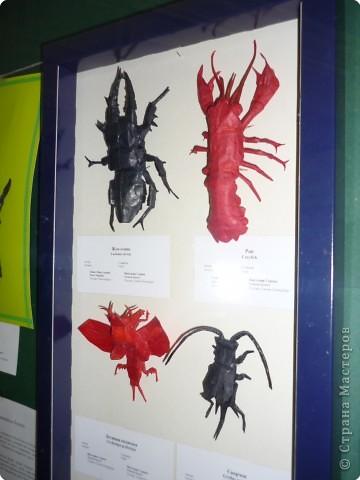Выставка в Зоологическом музее Санкт-Петербурга работает всё лето. Поскольку находится в энтомологическом отделе, то и представлено больше всего фигур насекомых. А ещё есть паучки. фото 26