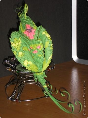 попугай Кеша Бумага фото 3