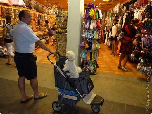 Мне очень понравился Пудель Дорони,а т. к. он ищет друзей, то я предлагаю ему фото.Может быть кто-то из испанских или французских собачек ему приглянется. фото 12