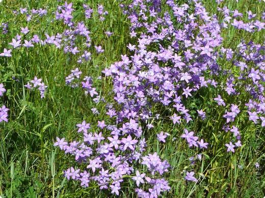 лето дарит цветы фото 9