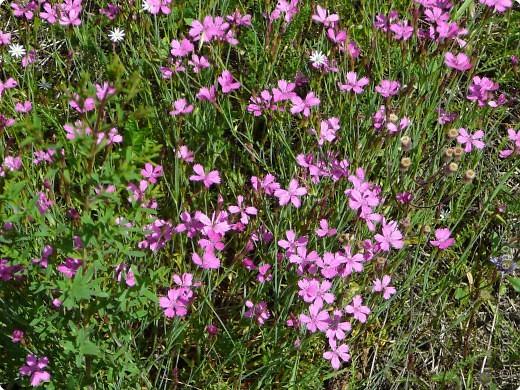 лето дарит цветы фото 8