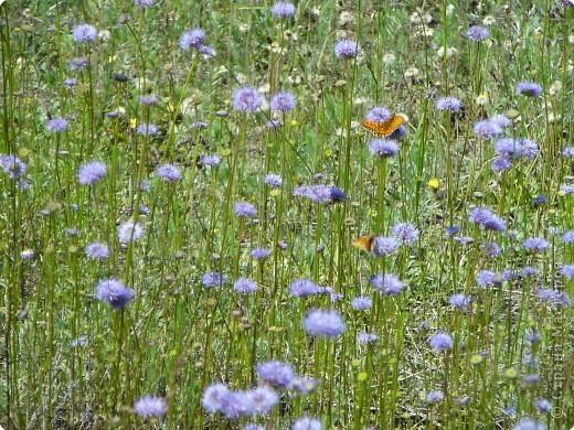 лето дарит цветы фото 7