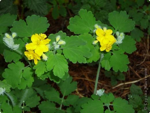лето дарит цветы фото 6