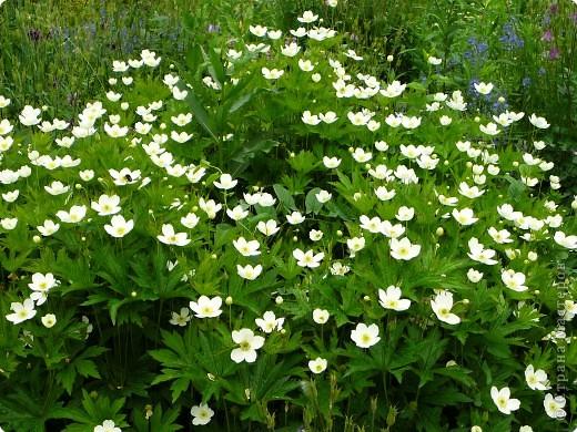 лето дарит цветы фото 1