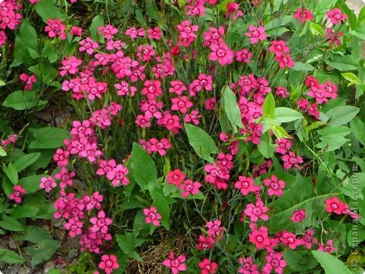 лето дарит цветы фото 3