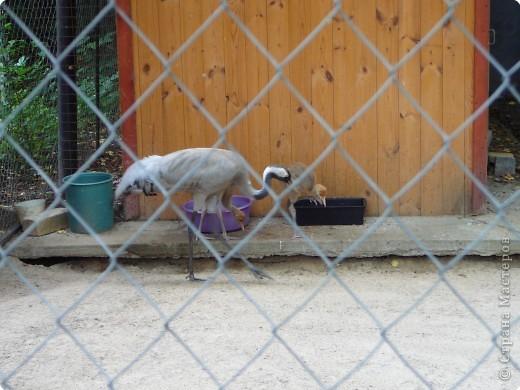 """Это мои гаврики(экипаж """"Звёздный"""" летнего школьного лагеря).Мы собрались в зоопарк! фото 8"""
