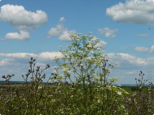 Я иду за ягодой по дороге с облаками. фото 6
