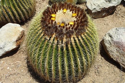 Недалеко от городка, в котором мы отдыхали, на горе обнаружился Сад кактусов. фото 11