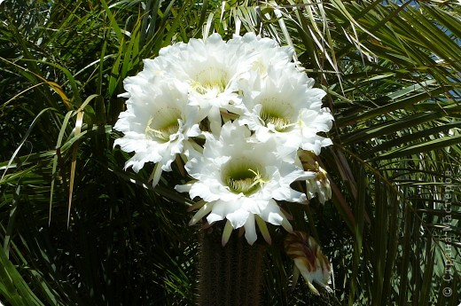 Недалеко от городка, в котором мы отдыхали, на горе обнаружился Сад кактусов. фото 1