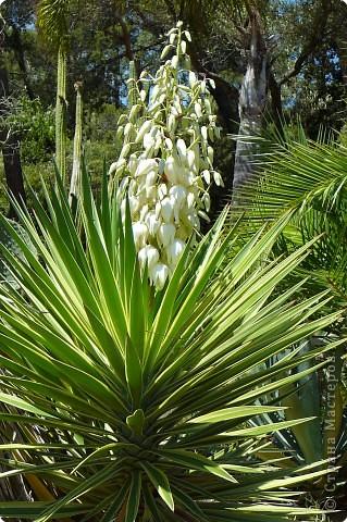 Недалеко от городка, в котором мы отдыхали, на горе обнаружился Сад кактусов. фото 14