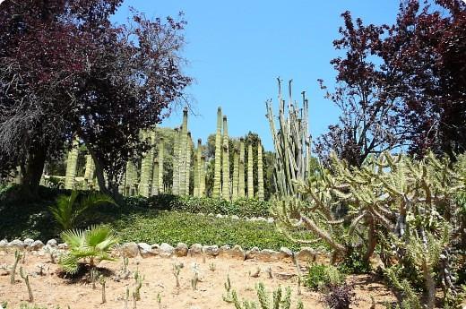 Недалеко от городка, в котором мы отдыхали, на горе обнаружился Сад кактусов. фото 2