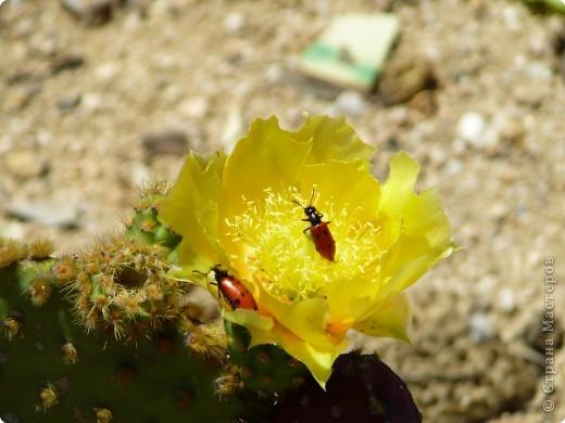 Недалеко от городка, в котором мы отдыхали, на горе обнаружился Сад кактусов. фото 15